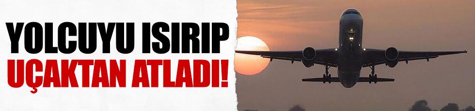 Önce yolcuyu ısırdı sonra uçaktan atladı