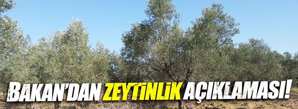 Bakan Özlü'den 'zeytinlik' açıklaması