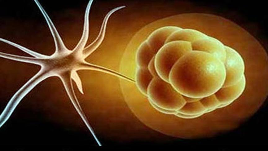Sentetik embriyo üretildi