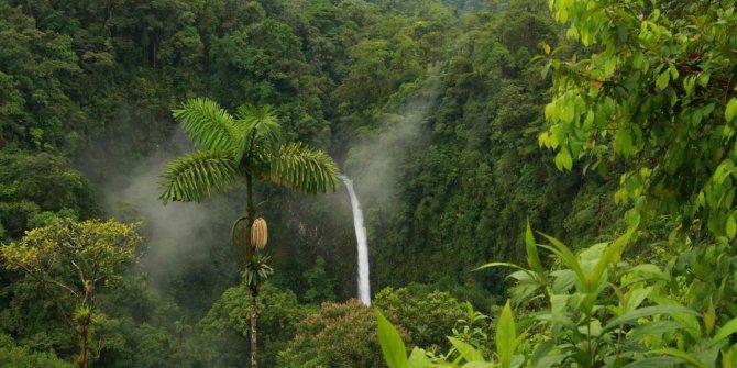 Amazon'daki orman kaybı 9 ayda yüzde 20 arttı