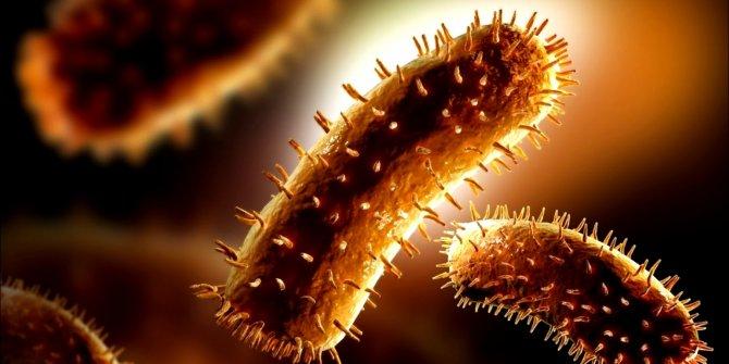Virüslerin bu özelliği tedavi için umut olabilir