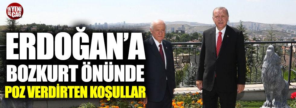Erdoğan'a bozkurt önünde poz verdirten koşullar
