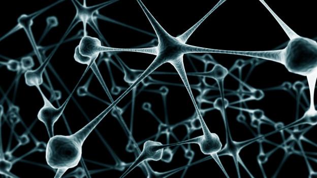 Fizikçiler asırlık 'nöron' teorisini çökertti
