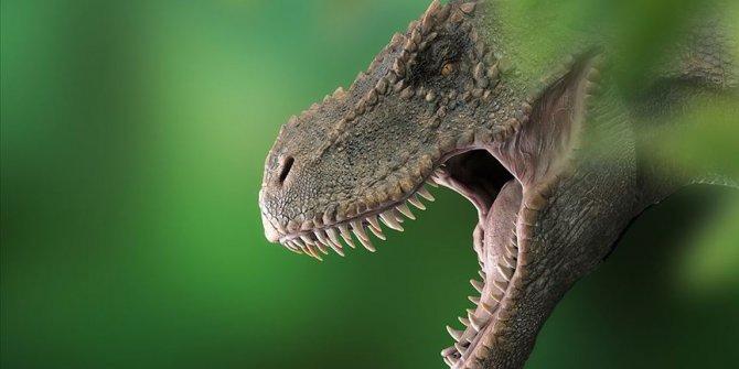T-Rex'lerin kafataslarında doğal klima keşfedildi