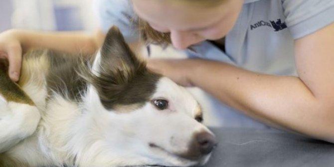 Salgın en az 25 köpeğin ölümüne neden oldu!