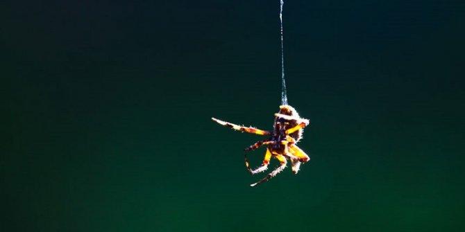 Bilim insanları, sentetik örümcek ipeği üretmeyi başardı