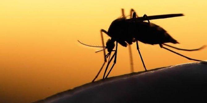 Sıtma hastalığını taşıyan sivri sinekler böcek ilacına dirençli