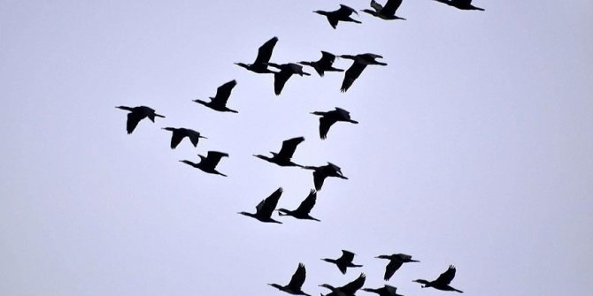 Uzmanlar uyardı: 'Ölü kuşlara dokunmayın'