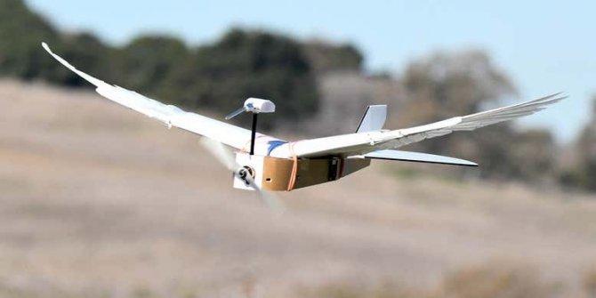 Gerçek güvercin tüyleriyle donatılmış robot tasarlandı