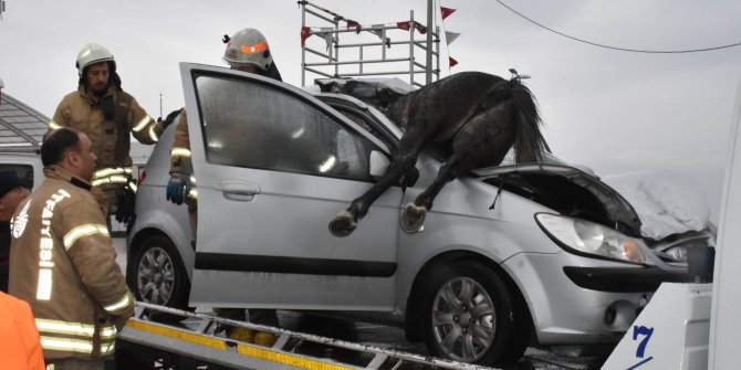 D-100'de otomobil başıboş atlara çarptı
