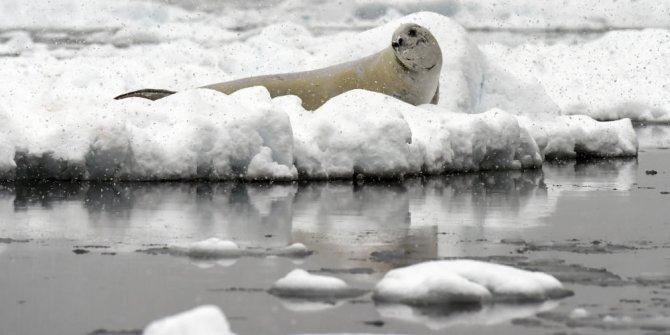 Antartika'da sıcaklık rekoru!
