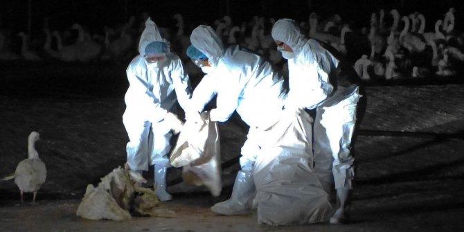 Bulgaristan'da salgın paniği