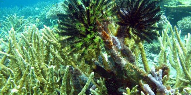 80 yıllık ömürleri kaldı! Mercan kayalıkları tehlike altında
