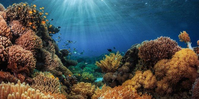İklim değişikliği yüzünden mercan resifleri tehlikede