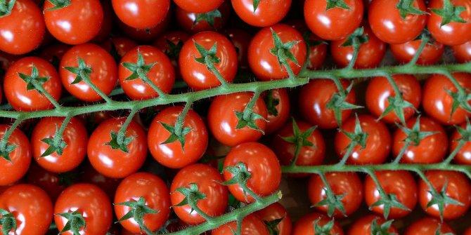 5 bin ton domates çöpe gitti