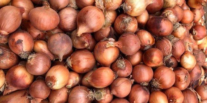 30 bin ton soğan çürümeye mahkum edildi