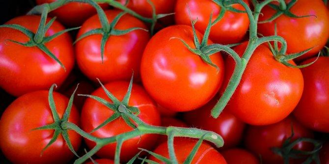 5 bin ton domates çöpe gitmişti... Rusya'dan yeni karar