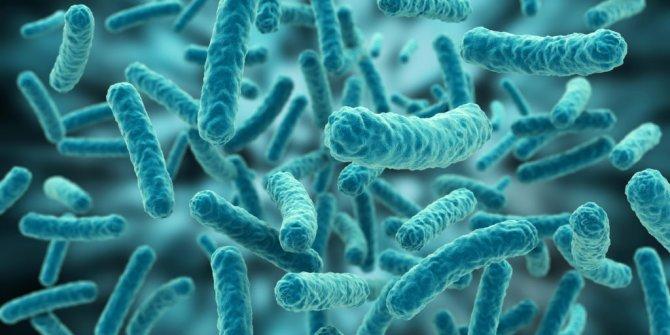 Bilim insanları bakterilerin şehir kurduklarını keşfetti