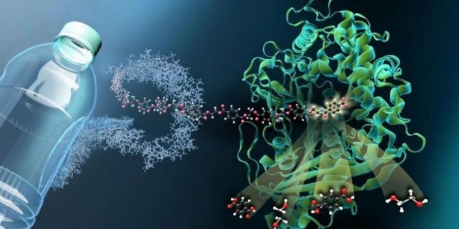 Araştırmacılar plastik yiyen bir bakteri keşfetti