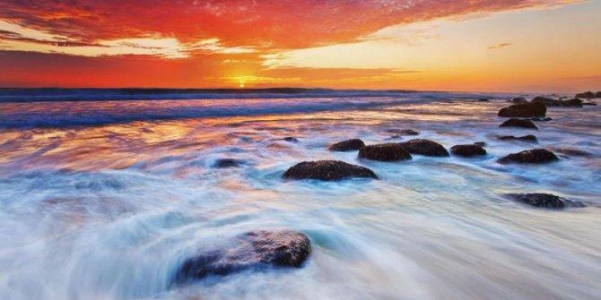 Küresel ısınma nedeniyle deniz canlıları kutuplara ilerliyor