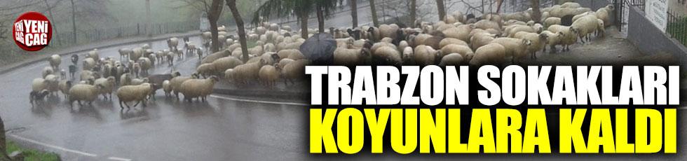 Trabzon sokakları koyunlara kaldı