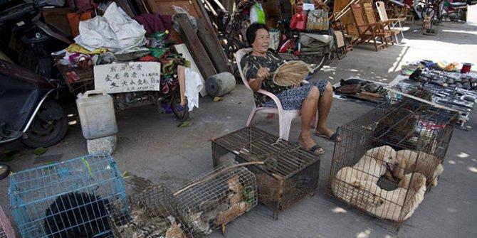 Ve nihayet… Çin'de kedi ve köpek yenmesi yasaklandı