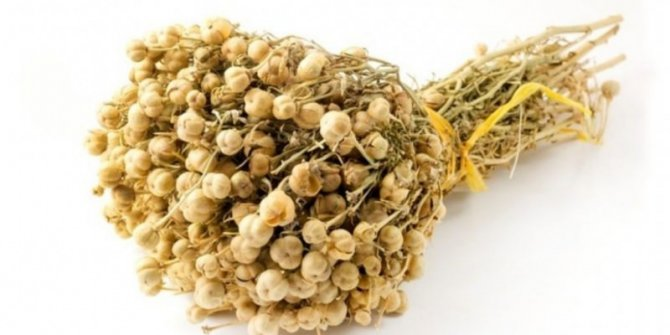 Üzerlik bitkisi nedir? Üzerlik bitkisinin faydaları nelerdir? Üzerlik çayı nasıl yapılır?