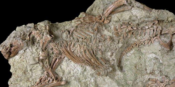 66 milyon yıl öncesine ait 'çılgın yaratık' fosili bulundu