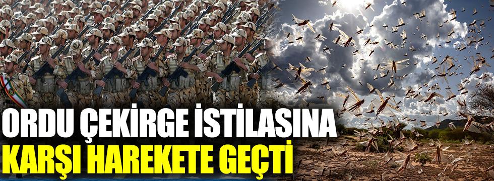 Ordu çekirge istilasına karşı harekete geçti