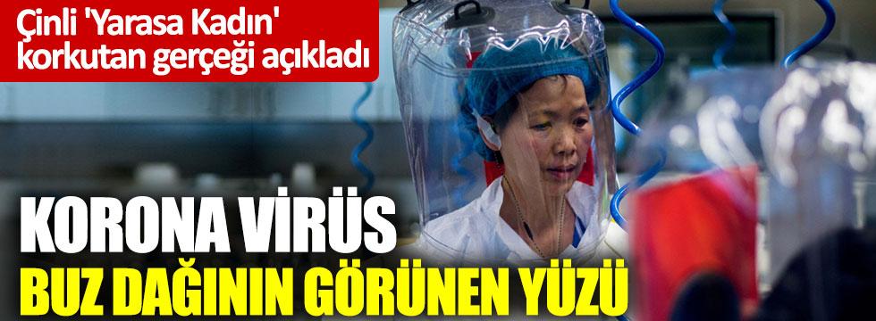 'Yarasa Kadın' uyardı: Korona virüs buz dağının görünen yüzü