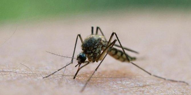 Bilim Kurulu Üyesi açıkladı: Korona sinekten bulaşır mı?