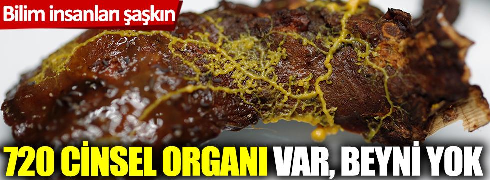 Bilim insanları şaşkın! 720 cinsel organı var, beyni yok...