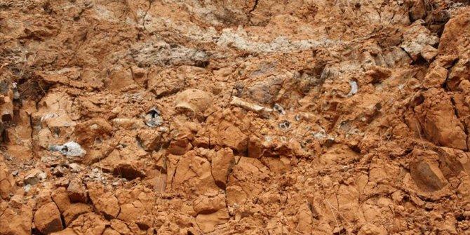 Hamsinin 45 milyon yaşındaki atası keşfedildi