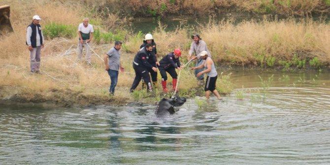 Uçurumdan düşen hamile inek 7 saatte kurtarıldı