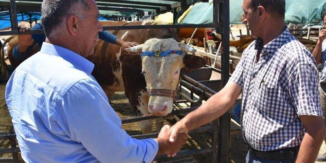 Hayvan pazarında el sıkışmak yasaklandı