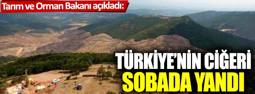 Tarım ve Orman Bakanı açıkladı: Türkiye'nin ciğeri böyle yandı