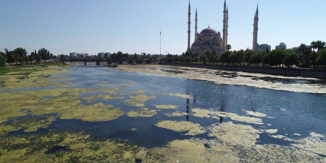 Seyhan Nehri yeşile büründü: koku ve sinekten yaklaşılmıyor