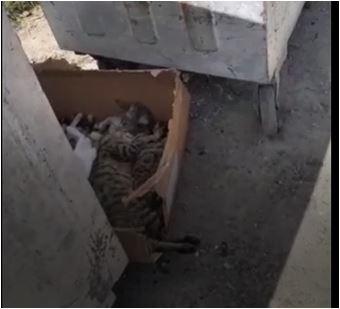 İstanbul'da vahşet: Yavru kedileri topluca öldürdüler