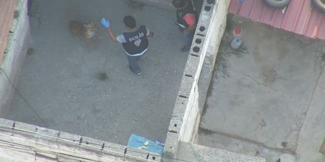Çete operasyonunda polise pitbull saldırısı