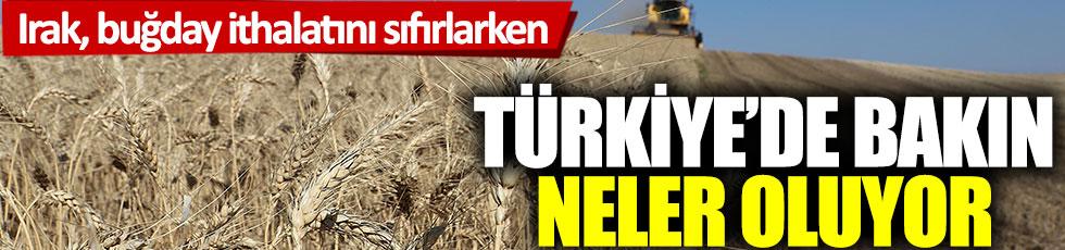 Irak, buğday ithalatını sıfırlarken Türkiye'de bakın neler oluyor
