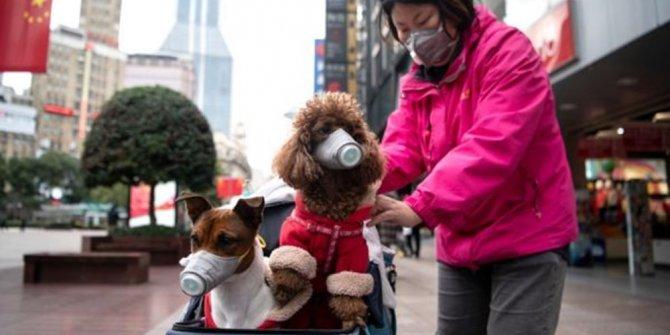 Evcil hayvanlarda korona çıktı: Sahipleri salgına yakalanınca test yapıldı