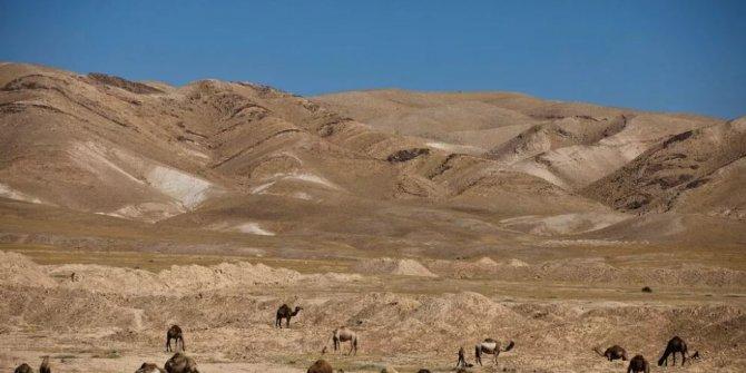 Bu seferde develer öksüre öksüre öldü, nedeni belli oldu