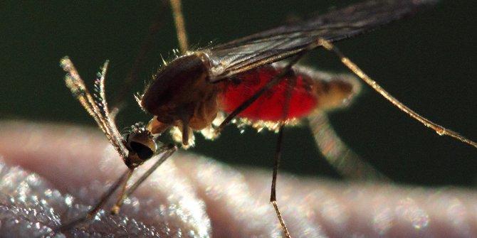 Sıtma parazitinin mutasyonu, ilaca dirençli çıktı