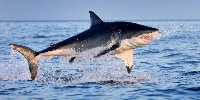 Şansın da böylesi… Önce timsah sonra köpek balığı ısırdı