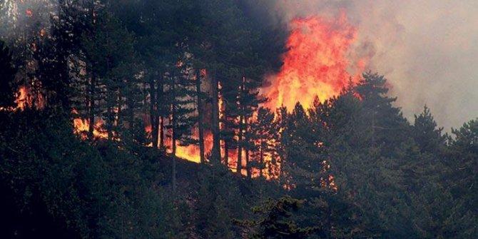 Ormanlık alanar için 81 ile genelge: Artık müsaade edilmeyecek