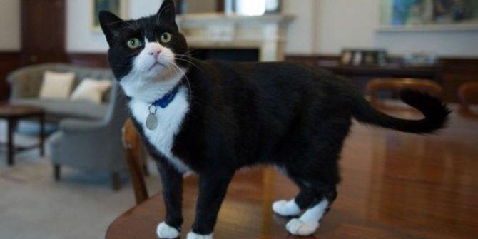Diplomat kedi emekli oldu