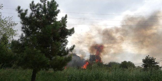 Büyükçekmece'de ağaçlık alanda yangın