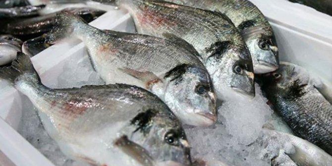 Resmi gazetede yayınlandı! 11 balık türü tescil edildi