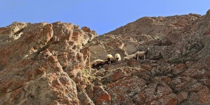 Dağda meleyen  koyun sürüsünü itfaiye kurtardı