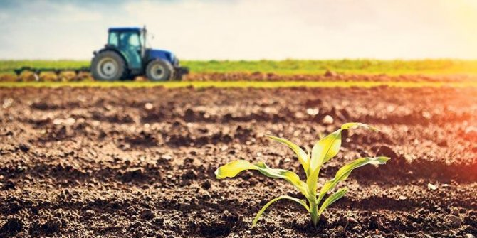Türkiye'nin tarım ürünü ithalatı arttı